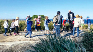ancient rock carvings bondi aboriginal walking tour by walangari karntawarra